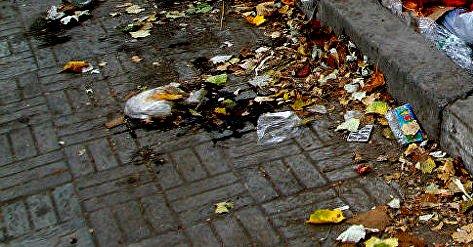 Цена вывоза мусора в Щелковском районе